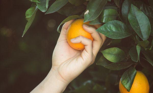How Assumptions Destroyed The Citrus Hill Brand N8d2Jm